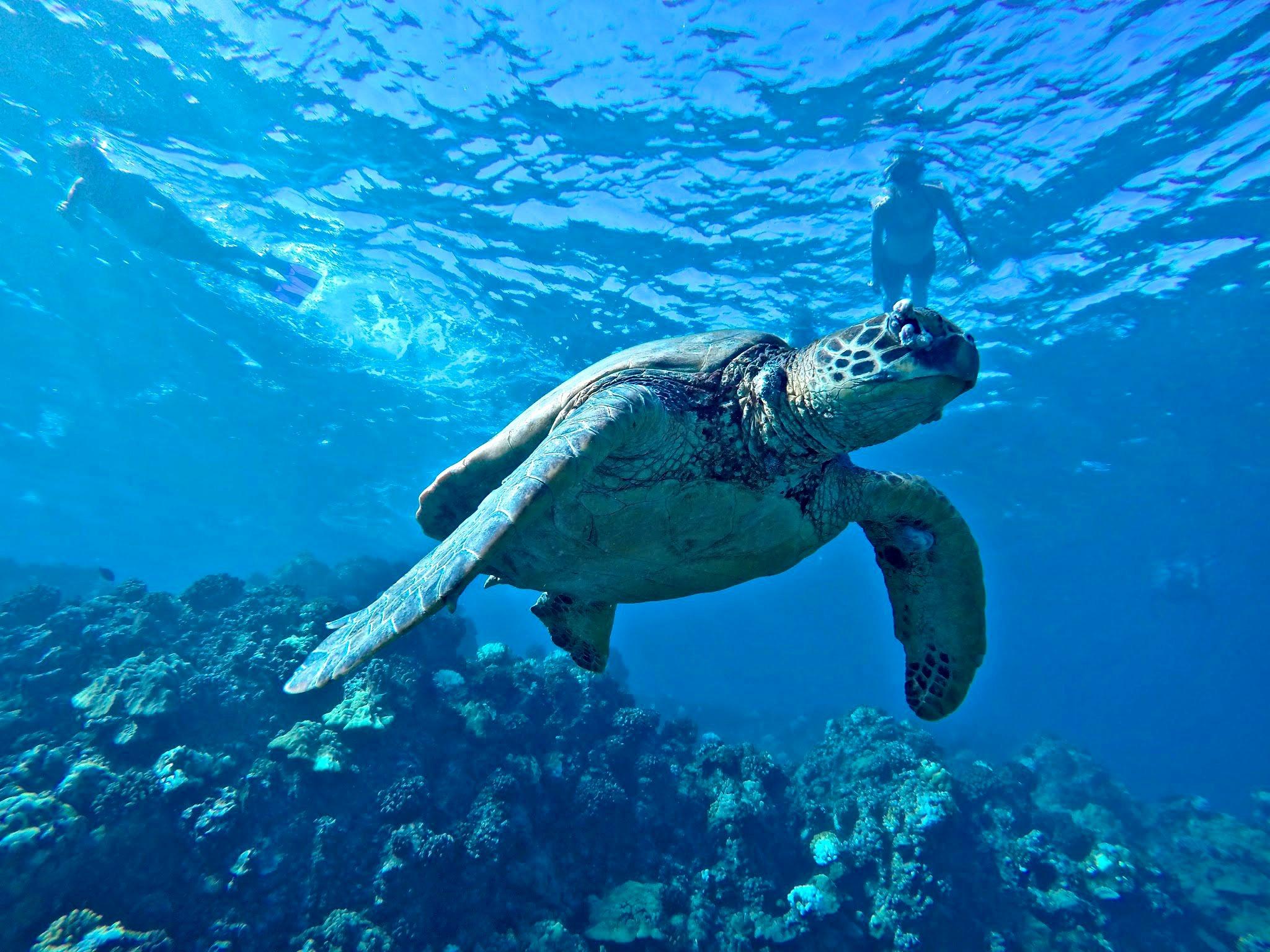 Kayaking in Maui