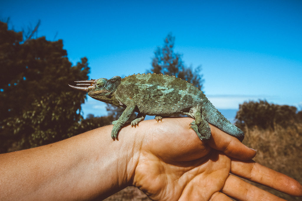 Offbeat Maui Experiences: Exploring the Upcountry