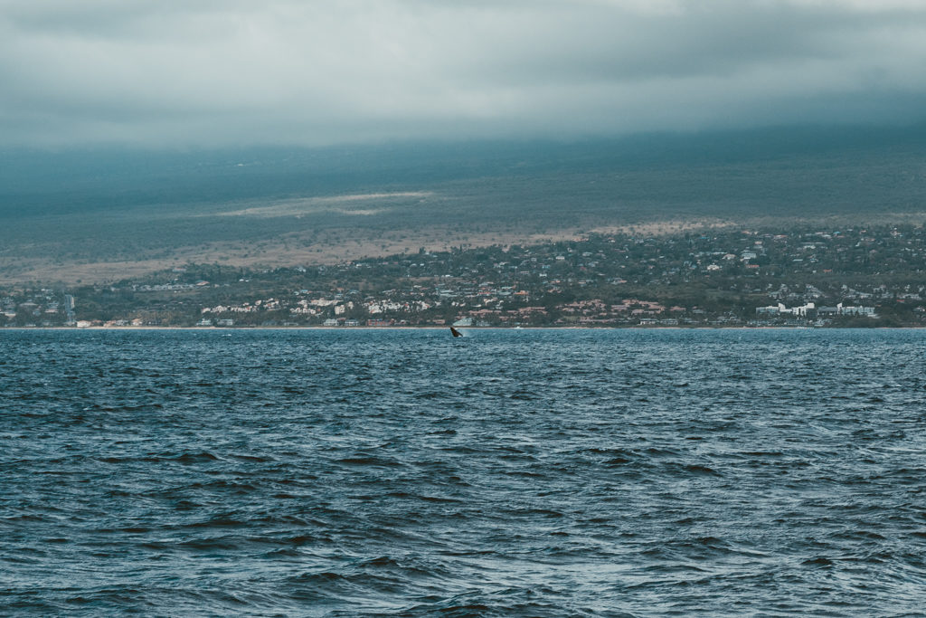 Whale Watching on the Pride of Maui